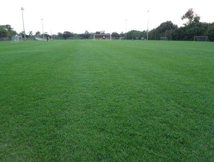 Figura 1 – Campo de treinamento de futebol com Celebration. Florida Atlantic University, FL, USA.